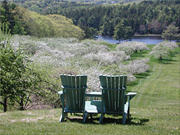 Chairs orchard